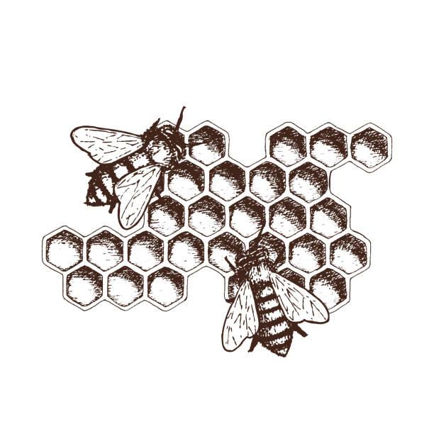 illustrazioni stock, clip art, cartoni animati e icone di tendenza di honey ink sketch illustration - favo
