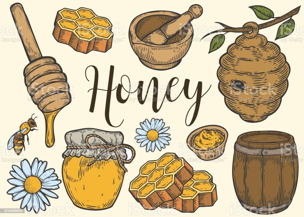 Honey jar, barrel, spoon, bee, honeycomb, chamomile, vintage set. Engraved organic food hand drawn sketch engraving illustration. Colorful isolated on white background. vector art illustration
