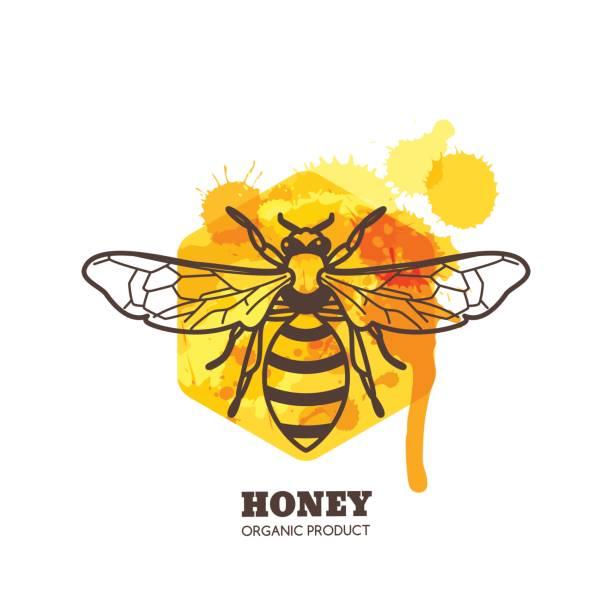 honey label, emblem design. vector honeybee on watercolor honeycombs. - bienenwachs stock-grafiken, -clipart, -cartoons und -symbole