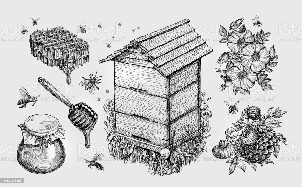 Honey, mead. Beekeeping, apiculture, bees sketch vector illustration - Illustration vectorielle