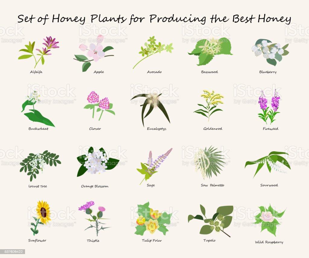 honey planty set vector art illustration