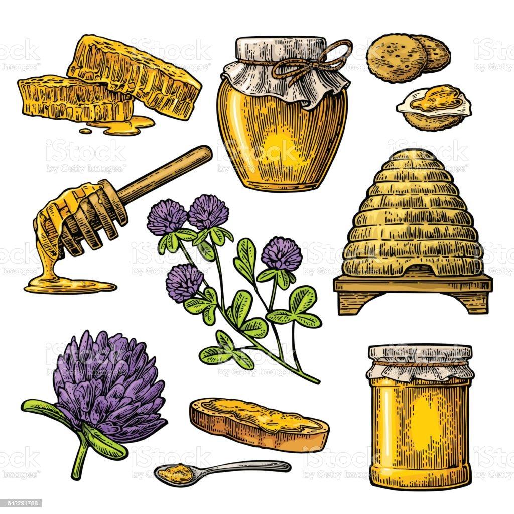 Honey set. Jars of honey, bee, hive, clover, honeycomb. Engraved vector art illustration