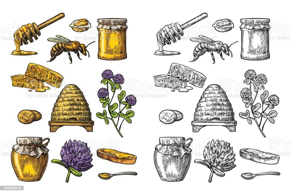 Honey set. Jars of honey, bee, hive, clover, honeycomb. Vector vintage engraved illustration vector art illustration