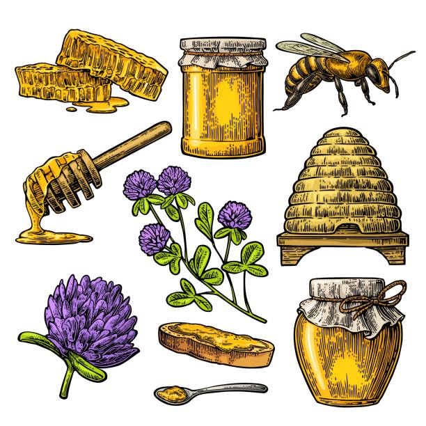 illustrazioni stock, clip art, cartoni animati e icone di tendenza di honey set. jars of honey, bee, hive, clover, honeycomb. vector vintage engraved illustration - impollinazione