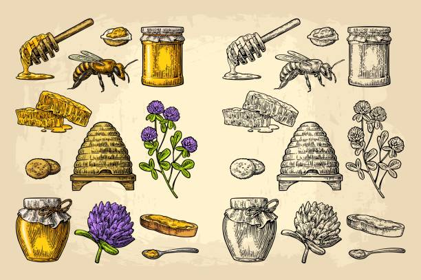 illustrazioni stock, clip art, cartoni animati e icone di tendenza di honey set. jars of honey, bee, hive, clover, honeycomb. vector vintage engraved illustration - miele