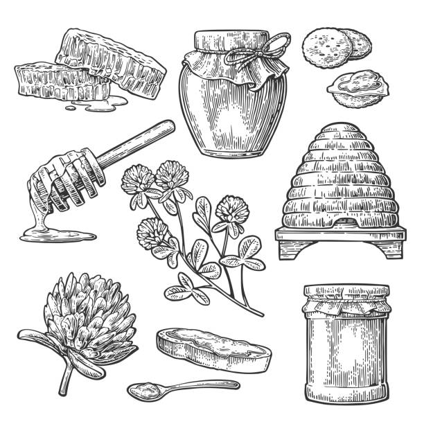 Honey set. Jars of honey, bee, hive, clover, spoon, honeycomb. Honey set. Jars of honey, bee, hive, clover, spoon, cracker, bread and honeycomb. Vector vintage black engraved illustration. Isolated on white background beehive stock illustrations