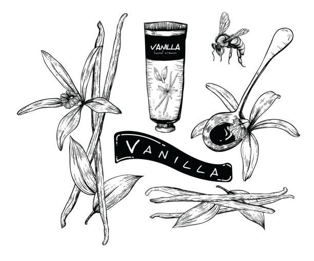 stockillustraties, clipart, cartoons en iconen met de reeks van de vanille van de honing - vanille