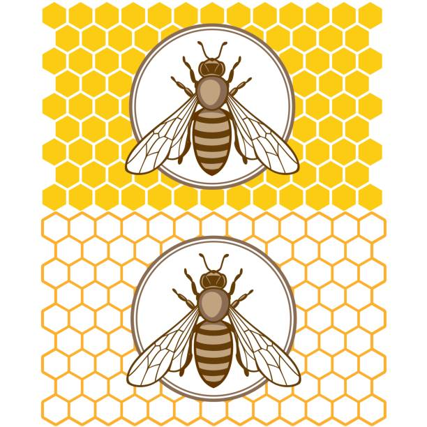 honey1 Honey bee set. Vector. Set of honey and bee labels for honey products. Isolated insect icon. Flying bee. Flat style vector illustration. queen bee stock illustrations