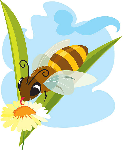HoneyBee - illustrazione arte vettoriale