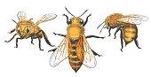 Honeybee vintage set