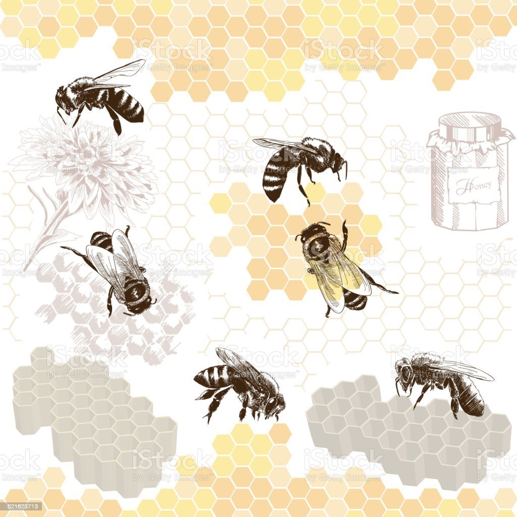 Honeybees on a comb vector art illustration