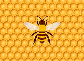 Honeycomb seamless background with one bee in the center. Vector illustration.