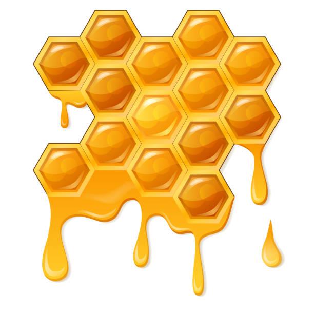 illustrazioni stock, clip art, cartoni animati e icone di tendenza di honeycomb with flowing honey - favo
