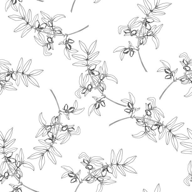 Honeysuckle berries on the branch. Floral seamless background on white. Vector. Line art. Seamless pattern with  honeysuckle berries on white background. Vector illustration. honeysuckle stock illustrations