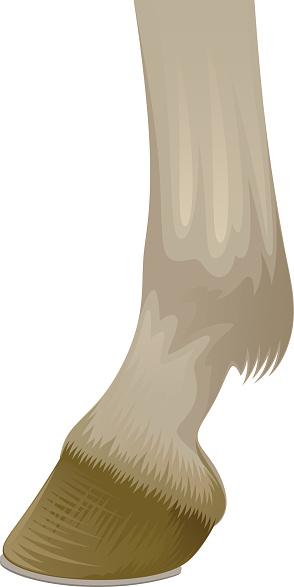 Hoof of horse