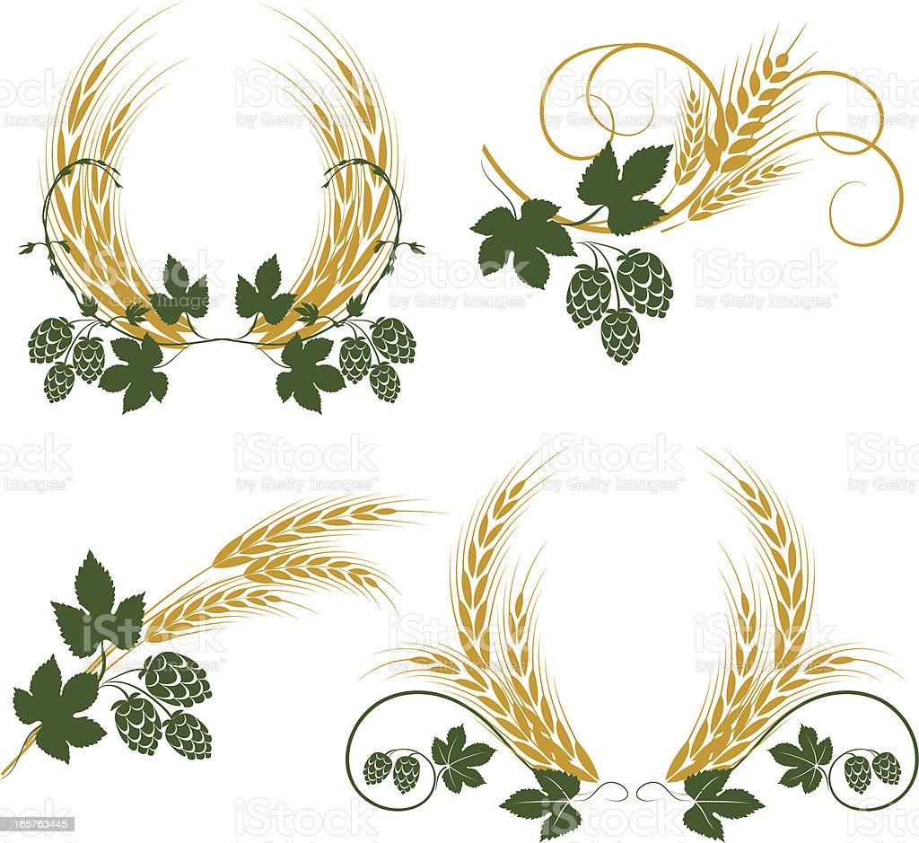 Hop and barley vector art illustration