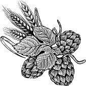 Hop and wheat illustration in engraving style. Design element for beer label, poster, emblem. Vector illustration
