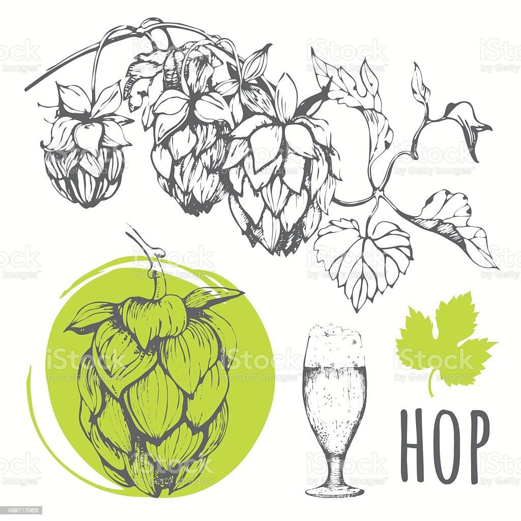 Hop set. Vector illustration with branch of hops. vector art illustration