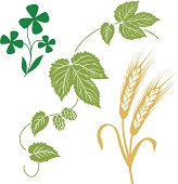 hops, wheat, barley, clover, beer