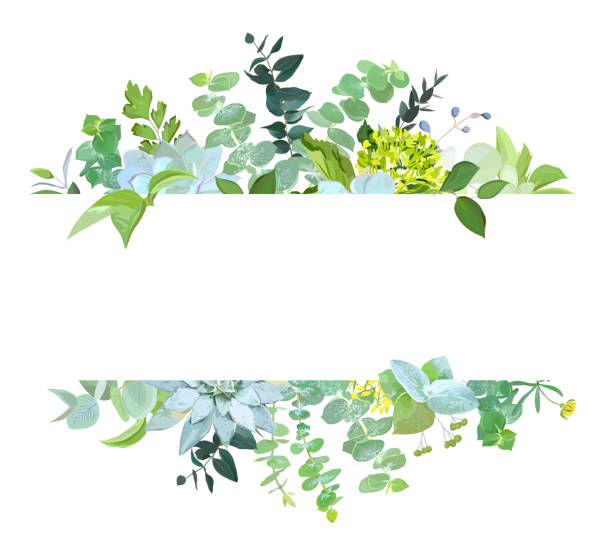 horizontalen botanische vector design banner - kräutermischung stock-grafiken, -clipart, -cartoons und -symbole