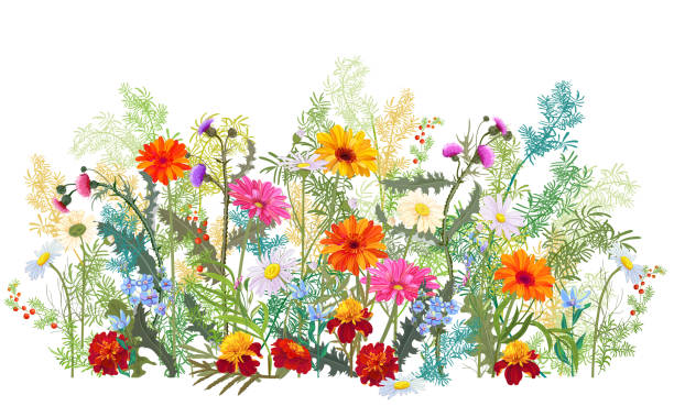 Horizontal autumn's border: marigold, thistles, gerbera, daisy flowers, small green twigs, red berries on white background. Digital draw, illustration in watercolor style, panoramic view, vector Horizontal autumn's border: marigold, thistles, gerbera, daisy flowers, small green twigs, red berries on white background. Digital draw, illustration in watercolor style, panoramic view, vector meadow stock illustrations
