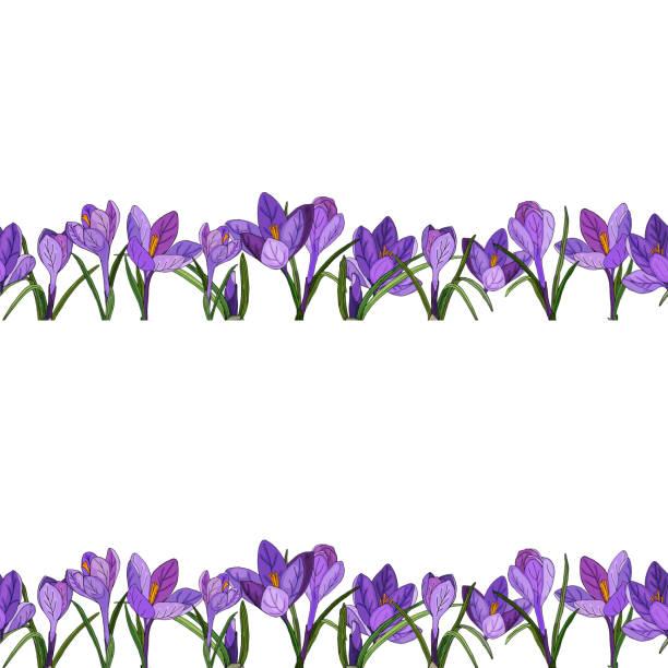 illustrations, cliparts, dessins animés et icônes de bordure horizontale de fleurs isolées, bourgeons, feuilles. les crocus, les gouttes de neige, les lys, les anémones, les inflorescences pourpres sont dessinés à la main. - crocus