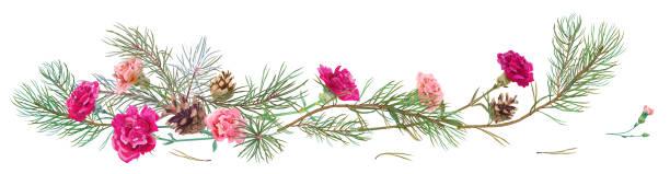 horizontale grenze mit tannenzweigen, zapfen, rote nelken schabaud auf weißem hintergrund, digitale hand zeichnen, aquarell-stil, dekorative botanische illustration für design, weihnachtsbaum, vektor - hochzeitsanstecker stock-grafiken, -clipart, -cartoons und -symbole