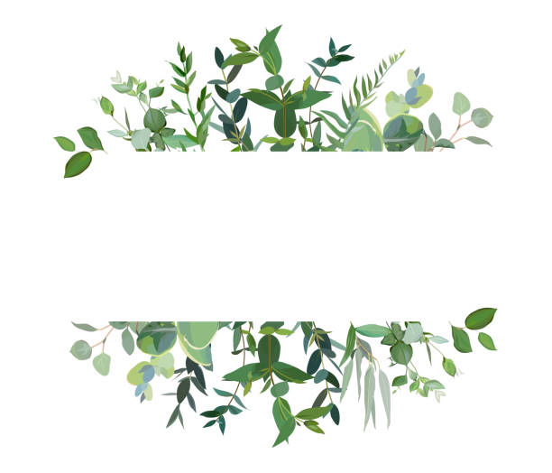 Horizontal botanical vector design banner. Horizontal botanical vector design banner. Eucalyptus, wildflowers, various plants, leaves and herbs.Natural card or frame. Greenery wedding simple invitation. Watercolor style. Isolated and editable lush foliage stock illustrations