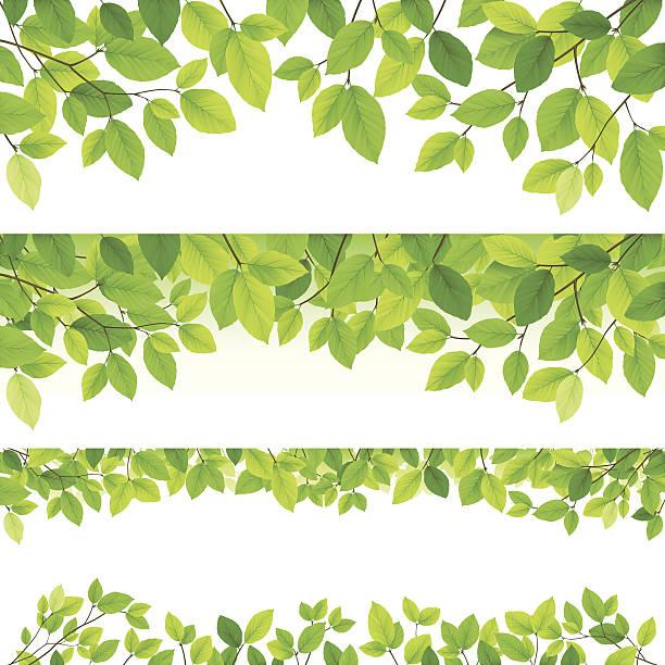 水平の葉のバックグラウンド - 葉のバックグラウンド点のイラスト素材/クリップアート素材/マンガ素材/アイコン素材