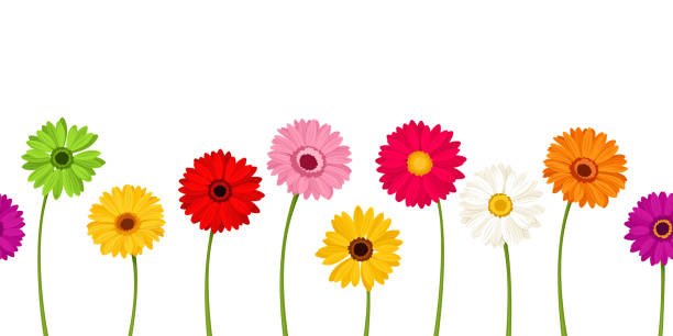 Horizontal seamless background with colorful gerbera flowers. Vector illustration. Vector horizontal seamless background with colorful gerbera flowers. plant stem stock illustrations