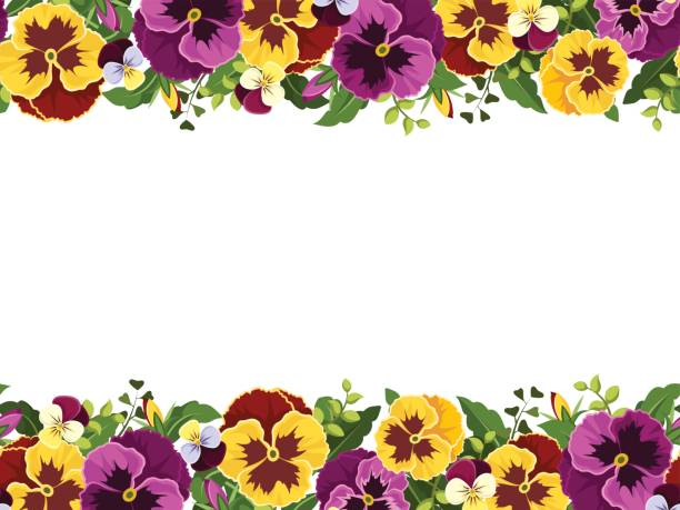Horizontal seamless frame with pansy flowers. Vector illustration. Vector horizontal seamless frame with yellow and purple pansy flowers and green leaves. pansy stock illustrations