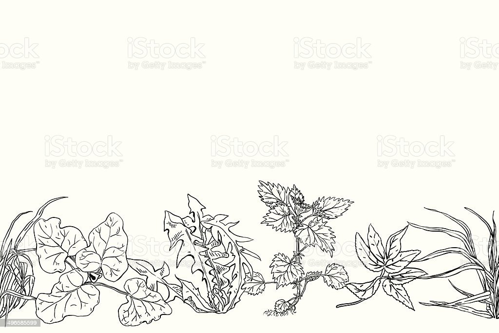 Horizontal seamless pattern various common herbs vector art illustration
