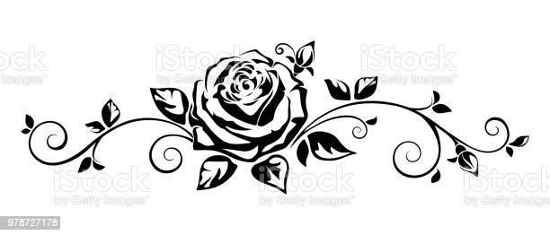 Horizontal vignette with a rose vector illustration vector id978727178?b=1&k=6&m=978727178&s=612x612&h=0bzcnctffvlvjpbeavwjlt4fxevrrm9ypi vcp diya=