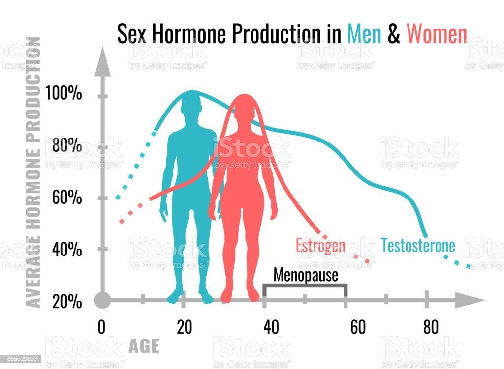 Hormonproduktiondiagramm Stock Vektor Art und mehr Bilder von ...