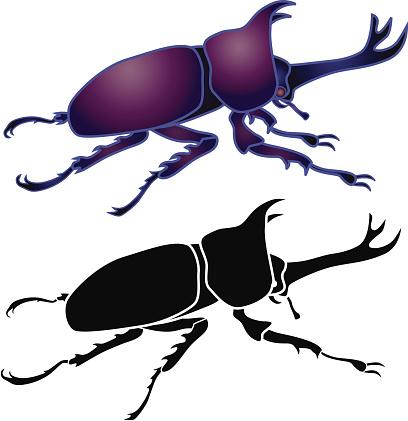 horned rhinoceros beetle