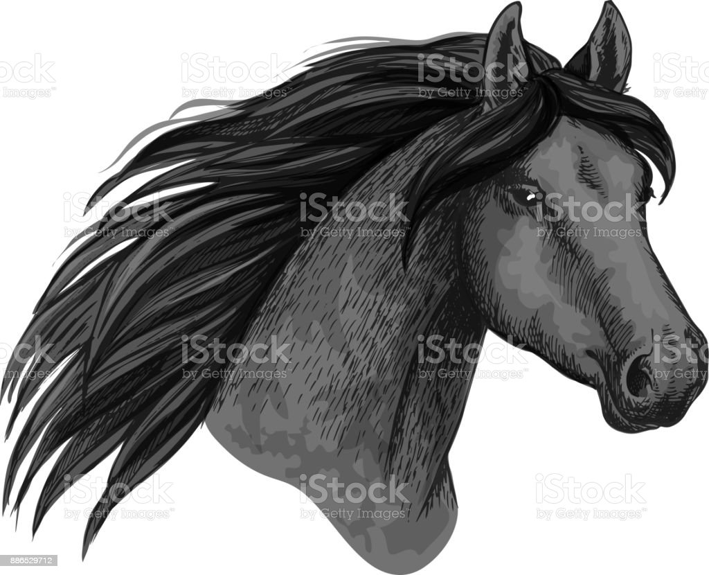 Horse Animal Muzzle Vector Sport Sketch Icon Stock Vector