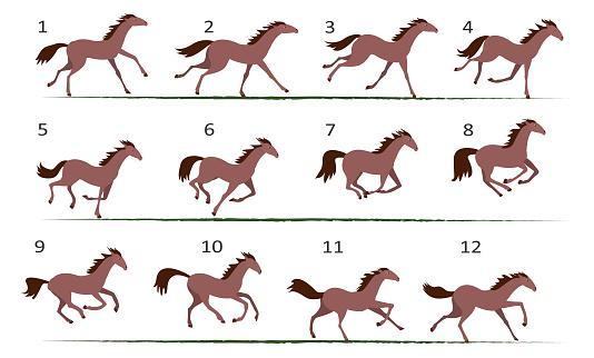 Horse animation. Horse running animation. Twelve poses of horse running.