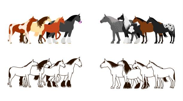 Royalty Free Gypsy Vanner Clip Art Vector Images