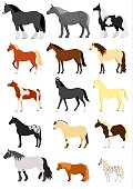 various horse breeds set.