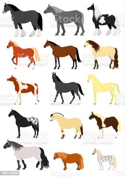 Horse breeds vector id650105636?b=1&k=6&m=650105636&s=612x612&h=5uomxewgna8kzusvidylfhj6efo6ult2d72tvhq kqy=