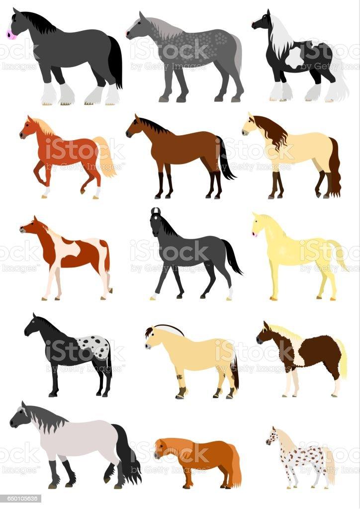 horse breeds vector art illustration
