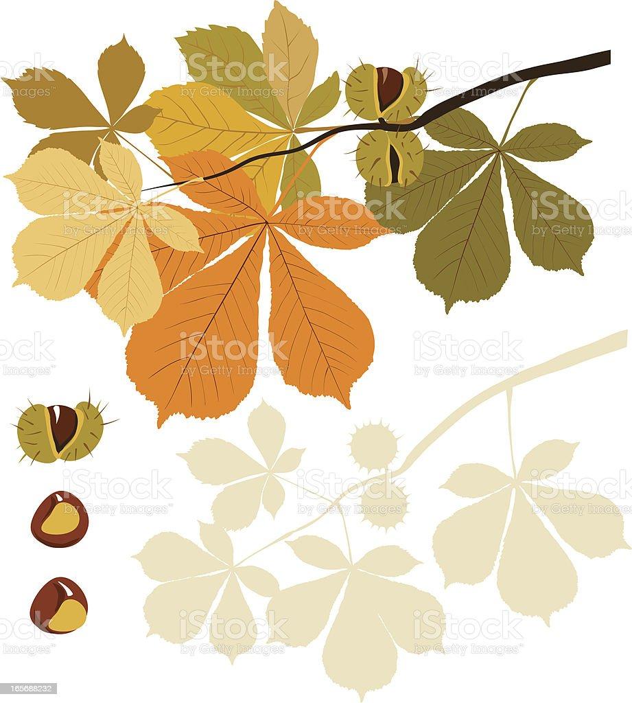 Horse chestnut tree vector art illustration