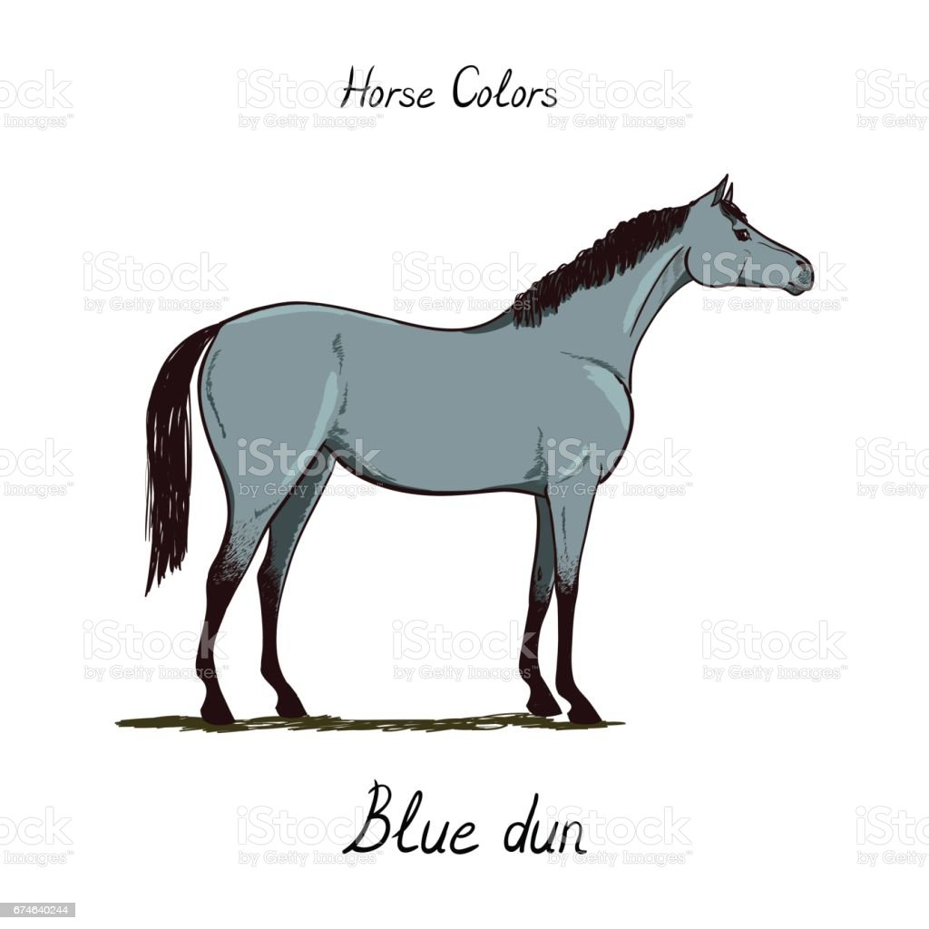 Horse color chart on white.  Equine blue-dun coat color with text. Equestrian scheme.