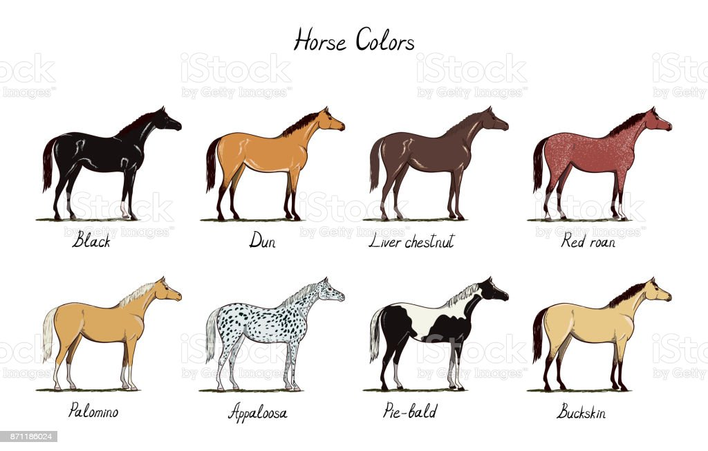 Horse color chart set.  Equine coat colors with text.