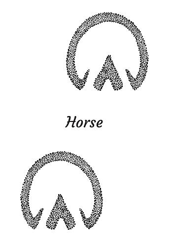 Horse footprint illustration, drawing, engraving, ink, line art,   vector