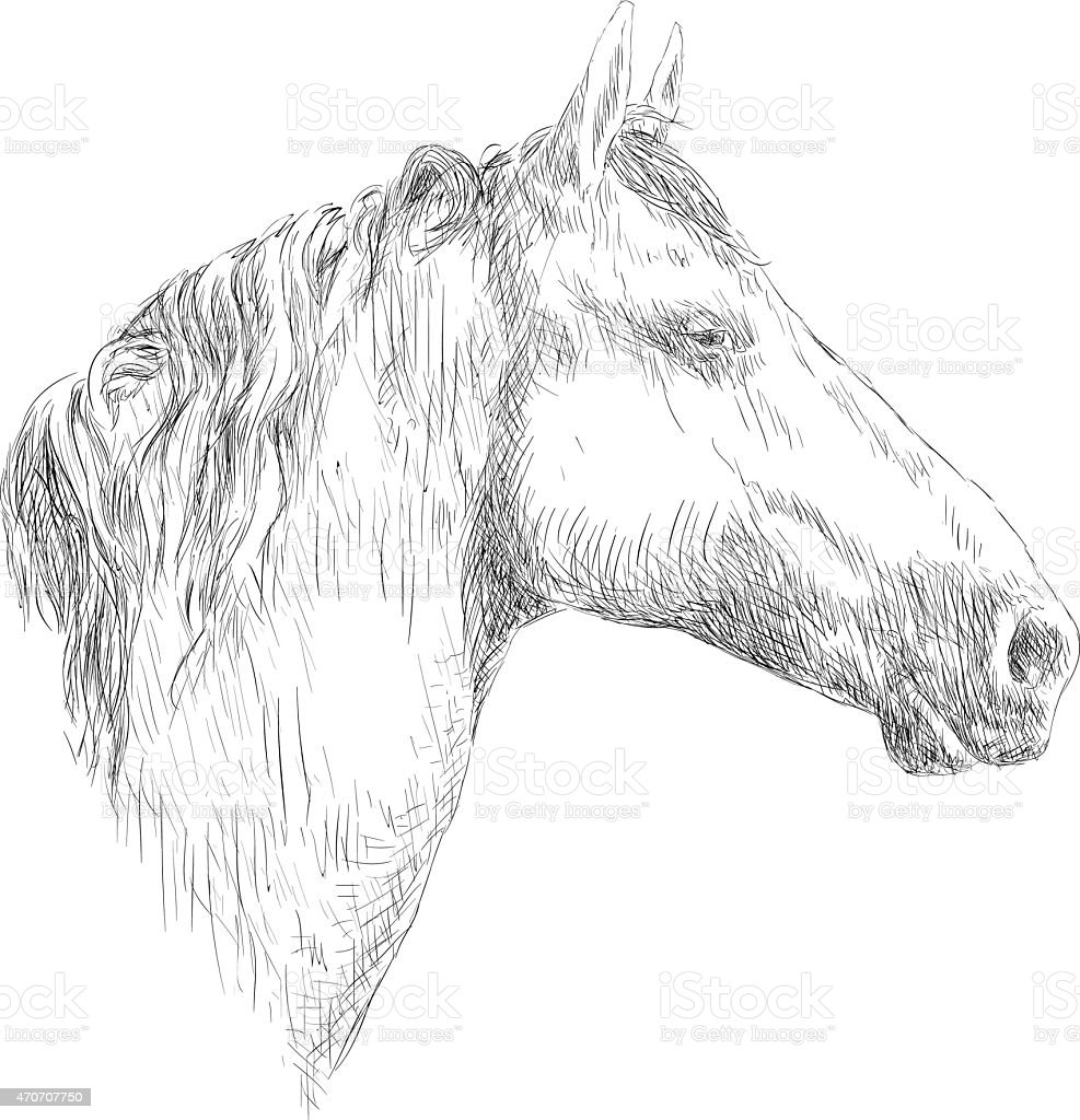 Horse Head Drawing Illustration Stock Illustration Download Image Now Istock