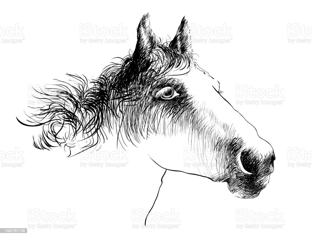 Horse Head Ink Drawing Sketch Isolated On White Stock Illustration Download Image Now Istock