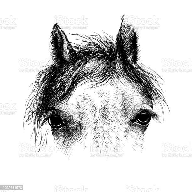 Horse head ink drawing sketch isolated on white vector id1032761970?b=1&k=6&m=1032761970&s=612x612&h=dts8zuoah3csss11 yskcj8mbweucpy5v6oau1oroza=