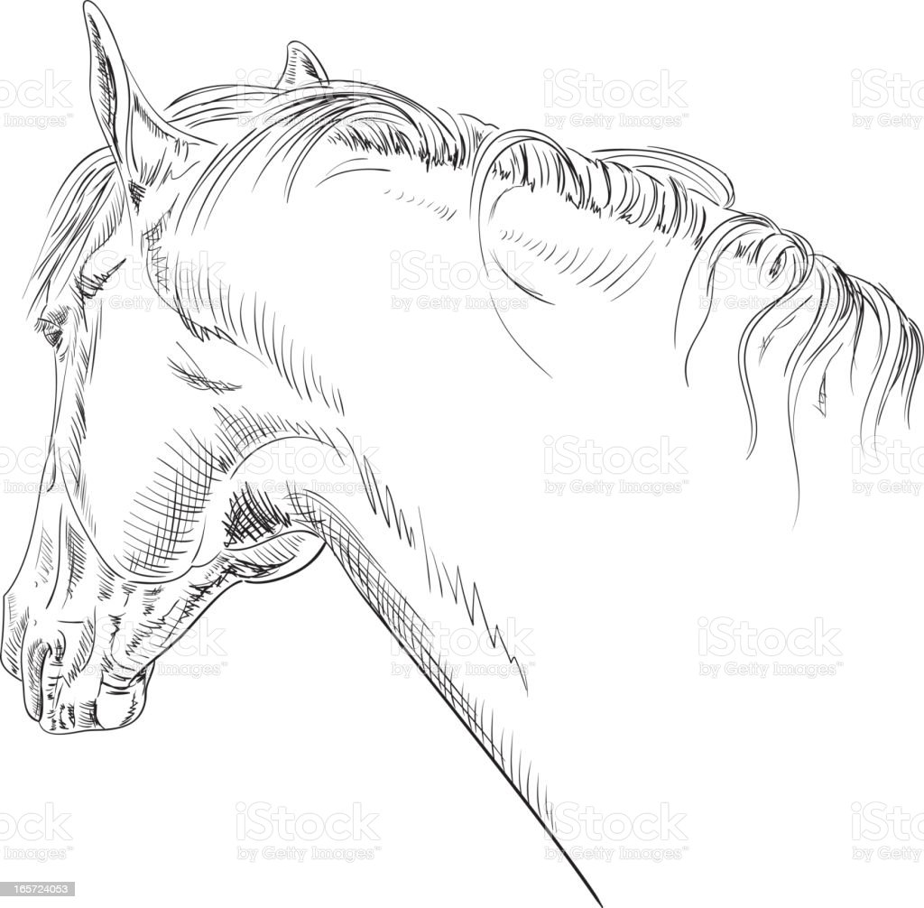 Horse Head Line Art Pen And Ink Drawing Stock Illustration Download Image Now Istock