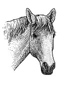 Horse head portrait illustration, drawing, engraving, ink, line art, vector